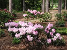 Blumenerlebnis Park